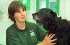 Homeopathic vet Clare Davies.