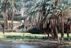 Villagers gather in the shade of palm trees on the outskirts of Luxor to discuss important matters of the day.