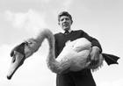 RSPCA Inspector Rex Harper with Kojak the swan.