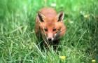 Visitor to my garden in Aberdeenshire.
