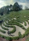 GLENDURGAN MAZE IS REBUILT.