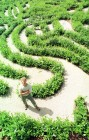 The 160 year old maze at Glendurgan gardens in Cornwall is given a new lease of life.