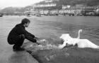 RSPCA Inspector Nigel Thomas releases a swan at Looe.